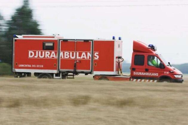 Djurambulansen i Skåne är ett av tre företag som vunnit upphandlingen av transport och uppstallning av omhändertagna djur i Halland.