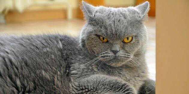 Sådan ägare, sådan katt – visste du att din katt härmar ditt beteende?