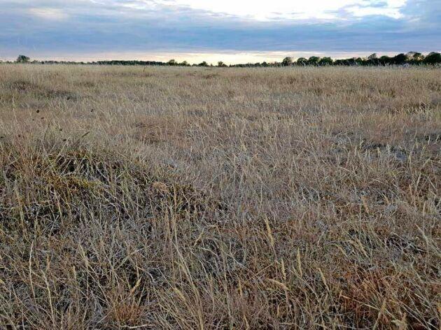 Enligt Roger Gustafsson det gäller inför kommande år att på gårdsnivå prova olika metoder så att man har en plan för sitt foder även om vallen inte håller.
