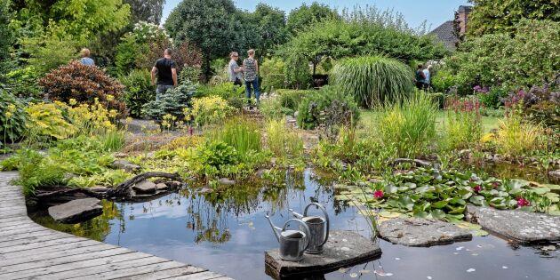 Lands trädgårdsevenemang Öppen trädgård på väg mot nytt rekord