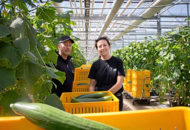 Idag producerar Gummagården 1800 ton gurka om året. Med det nya växthuset kommer Jeppe Robertsson och Linda Lövberg upp i 3000 ton. Gurkorna går mestadels till Ica via Svenska Odlarlaget.