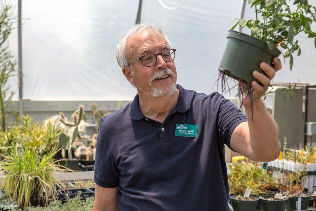 Botanikern Bruce Pavlik vid University of Utah med en vildpotatis-planta. Han driver nu ett projekt för att få delstatens invånare att ge den sällsynta växten en renässans.