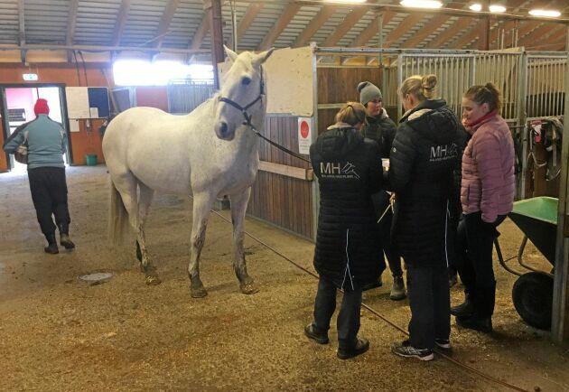 Sedan i mitten av februari har inga nya hästar insjuknat.