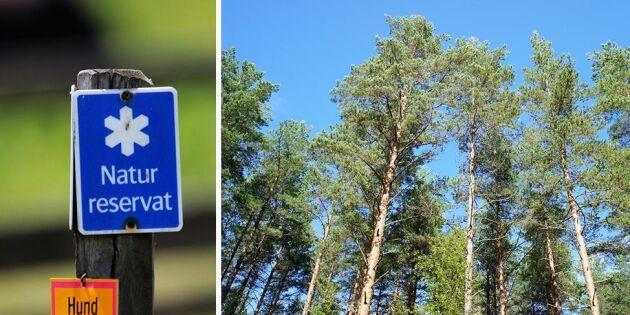 Utan äganderätt inget grönt skogsbruk
