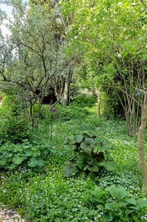Woodlandet vid västra gaveln bjuder på en frodig miljö med magisk stämning. Silverbusken till vänster bidrar med sin underbara doft.