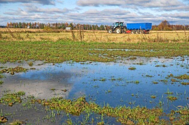 Blöt skörd i Västerbotten.