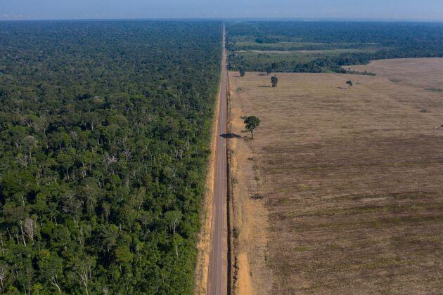 Sojaodling på tidigare skogsmark i Brasilien (arkivbild).