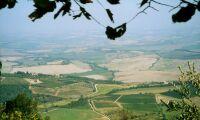 Strängare regler för italienska ekoodlare