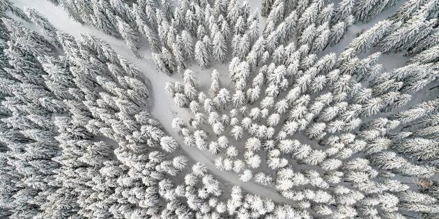 Sveaskog säljer mest i norr