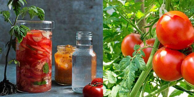 Lätt och frisk tomatdricka med rabarber