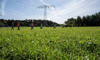 Ytterligare bekräftade fall av afrikansk svinpest i Tyskland