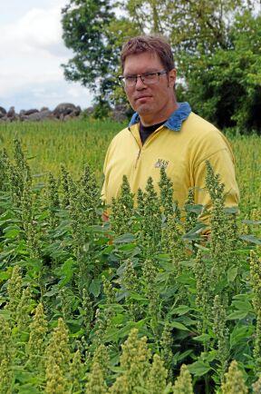Niklas Svensson odlar tillsammans med sin bror Per Modig mer än 15 olika grödor på sina 160 hektar.