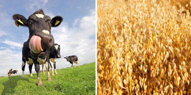 Mjölk eller växtbaserad dryck - vad är bäst?