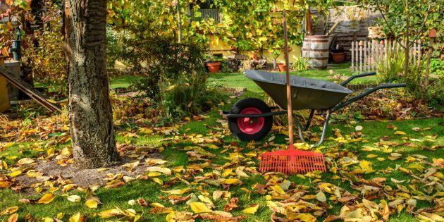 Höststäda trädgården smart – tips som sparar tid