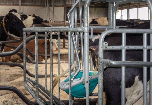 När koppen berör djuret mekaniskt stimuleras kon att släppa ifrån sig urinen.