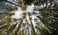Sveaskog satsar på ligninproduktion