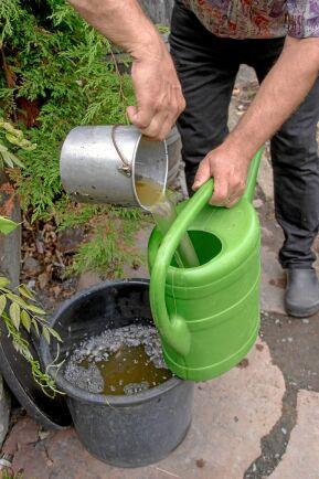Näringskrävande grönsaker får tillskott av nässelvatten några gånger under säsongen. Ett enkelt sätt att skapa kretslopp i trädgården.