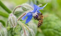 Så vill Naturvårdsverket öka de pollinerande insekterna