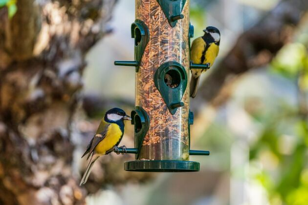 Vintern närmar sig. Vid fågelmatningen är en utmärkt plats för fågelskådning. Fågelskådning är lika aktuellt året runt.