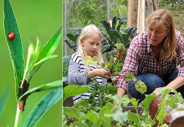 Vårda plantorna med snälla metoder.