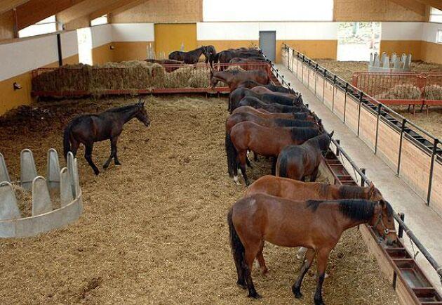 Totalt finns plats för omkring 70 hästar i olika lösdriftsstallar.