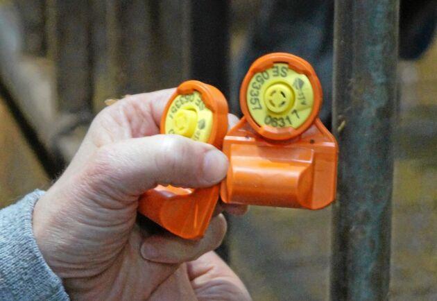 Ett öronmärke med sensorer som mäter temperatur och örats rörelsemönster står för datainsamlingen i Cow Manager.
