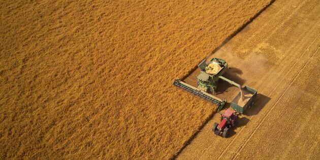 Hälften av spannmålen bärgad i söder