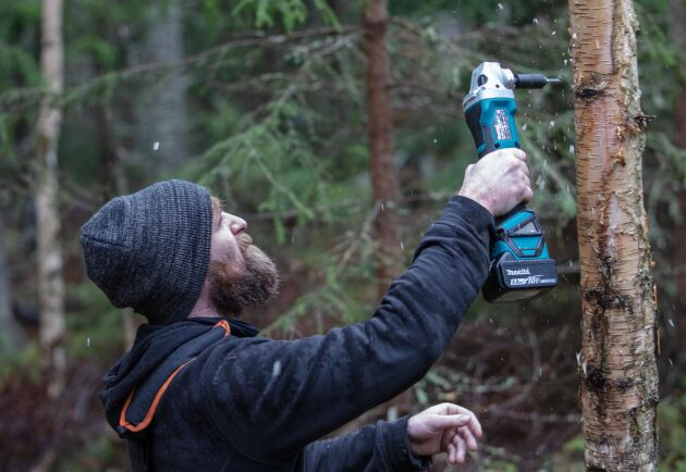 Nicholas O'Sullivan frän Kääpä Forest visar hur det ska gå till. Bara borra och banka in 3-4 ymppluggar per träd, och sen täcka hålen med lite vax.