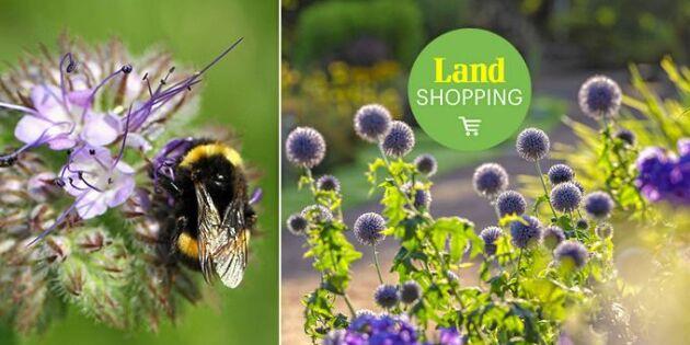 Hjälp ett bi – så blir din trädgård till ett insektsparadis