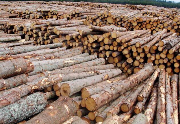 Efter en snabb ökning sedan slutet på 2018 är Europa nu den nästa största exportören av rundvirke av barrträ till Kina. Arkivbild.