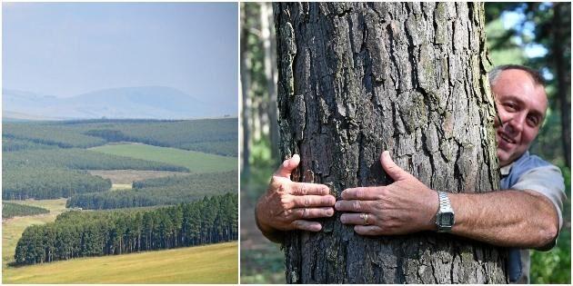 Här växer skogen så det knakar –bokstavligen