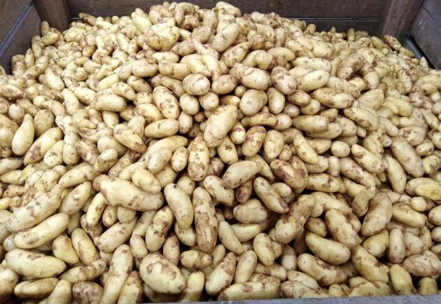 Regeringen vill analysera vad ett beredskapslager ska innehålla. Kanske potatis?