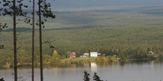 Priserna stiger på svenska skogsfastigheter