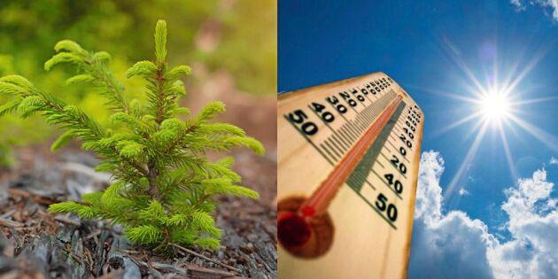 De svenska växtzonerna förflyttas – en meter per timme