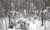 Orimliga krav på små skogsägare