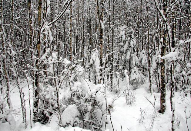 Skogsägarna avsätter frivilligt fem procent av sin mark, skriver Paul Christensson.