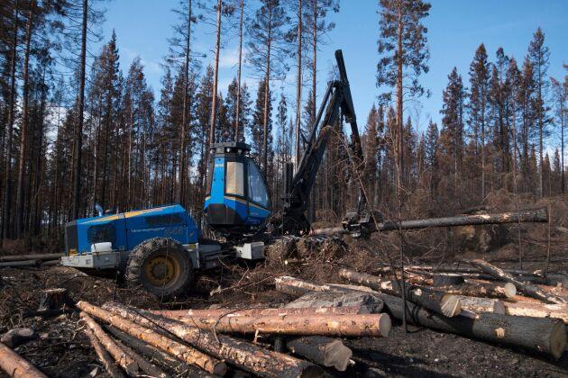 Arkivbild. Nedhuggning av brandskadad skog efter skogsbranden i Västmanland 2014.