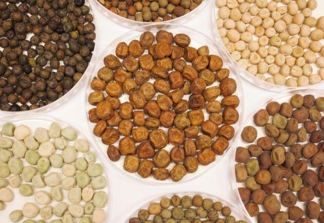 Några av de ärter som har levererats till det svenska projektet från genbanker runt om i världen. Alla hör trots olika utseenden till samma art, Pisum sativum.