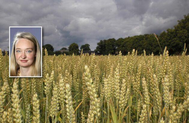 Förhoppningsvis slipper odlare nu fler politiska utspel som påverkar marknaden negativt och får istället se fortsatt välbehövliga prisuppgångar till följd av ökad väderoro, anser ATL:s växtodlingsreporter Malin Eborn.