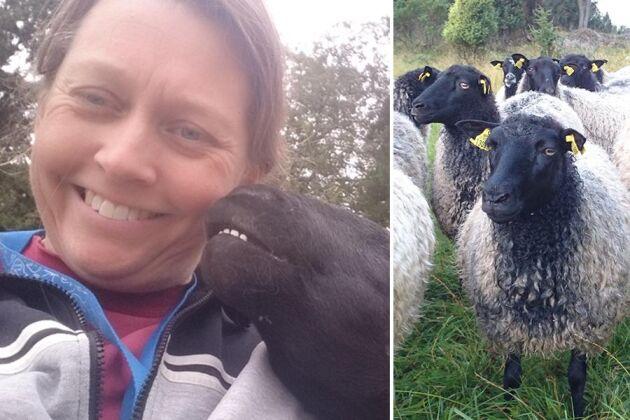 Annette Westerberg älskar sitt liv med fåren. – Det är fantastiskt att komma upp på morgonen till fåren som vill bli klappade, säger hon.