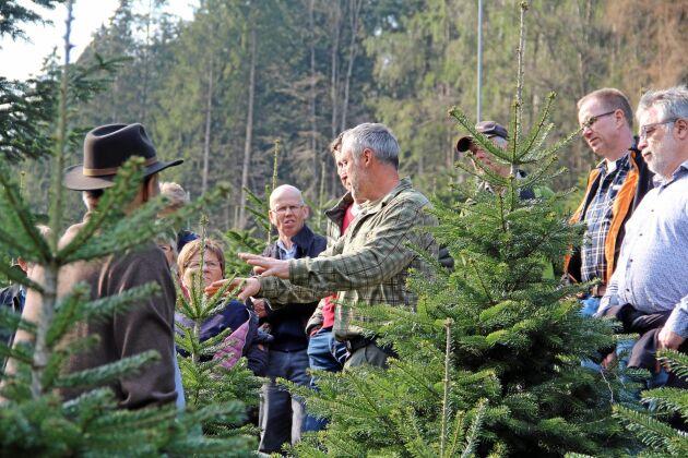 """Harald Müller sköter varje julgran individuellt. Genom att lätt """"skada"""" toppskotten med en speciell tång kan han bromsa tillväxten. – Det går att göra under ett tidsfönster i maj månad, säger han."""