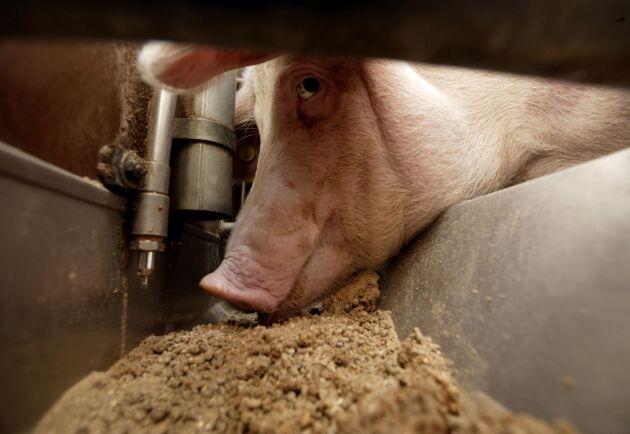 WH Group i Kina är världens största köttföretag.