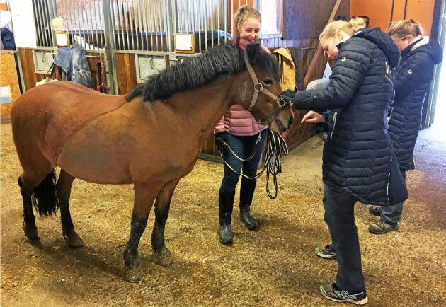 I förra veckan var veterinären hos Skånsta Ryttare för att kontrollera djuren. Flera hade fortfarande svårt att röra sig normalt.