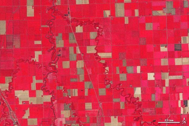 Landsatbild av Noreen Thomas ekojordbruk i nordvästra Minnesota, USA. Noreen har tränat på många satellitbilder och ser angripna grödor som gulnar medan rött visar frisk gröda. Svart visar att området översvämmats och brunt att hennes kemfria ekogrödor skadats av pesticider. Man kan också se den tre meter breda karantänzonen mot konventionellt odlade grödor. Foto: USGS/NASA