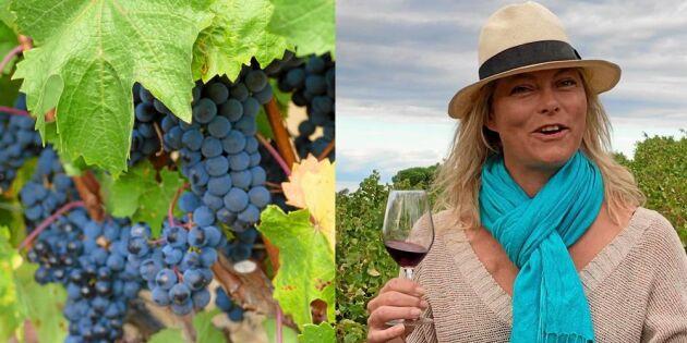 Lyssna på vinet! Låt alla sinnen vara med på vinprovning