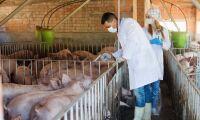 EU-kommissionär ryter till om ryska fejknyheter om svinpest