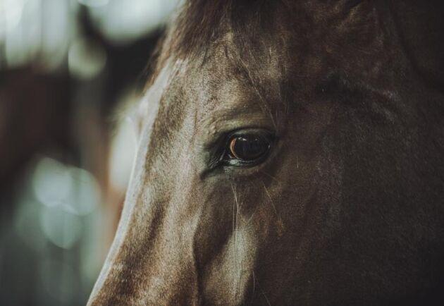 Allt fler hästägare vill få sin häst kremerad menar Svensk Lantbrukstjänst nu testar sådan verksamhet i södra Sverige.