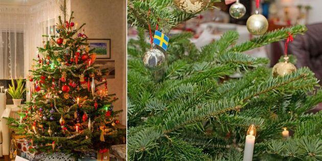 Så får du granen att överleva hela julen – 5 snabba tips!