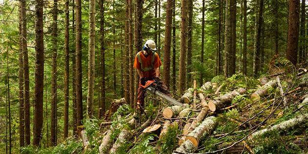 Usel lönsamhet för skogsbruket