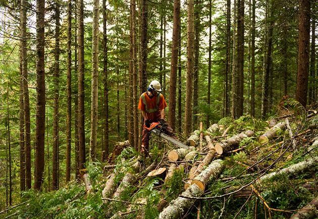 Viktigast är att äganderätten stärks och inte hotas och att skogsbruket är lönsamt, skriver Karin Brunsberg, skogsägare, Lyckeby.